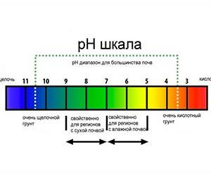 Какие данные пользователя можно увидеть в Ph